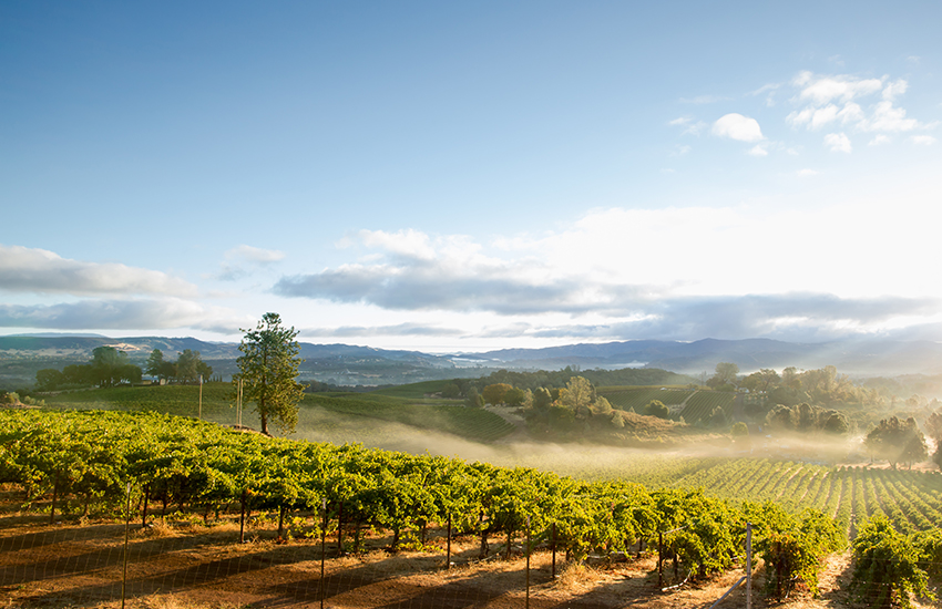 Memorial Day weekend vacation in Napa Valley, California